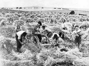 Kibbuzniks bei der Feldarbeit. | Members of the kibbutz at work in the fields.